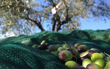 olive - olio